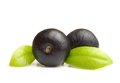 Amazon Acai Berry Fruit With L...
