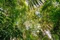 Amazon Jungle Canopy Royalty Free Stock Photo