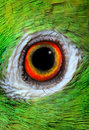 Amazon parrot photo of eye close up Stock Photo