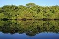 Amazon Rainforest Royalty Free Stock Photo