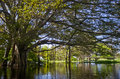 Amazon river brazil mangrove forest on the in Stock Photos