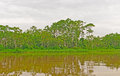 Amazon river at high water near the napo river Stock Photo