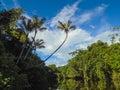 Amazon river Royalty Free Stock Photo