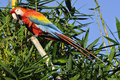 Amazonian macaw ara ararauna in front of a blue sky Stock Images
