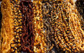 Amber beads Stock Images