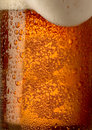 Amber beer in glass close up Stock Images
