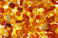 Amber close up shot of baltic stones backlight illumination Royalty Free Stock Photography