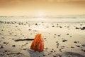 Amber stone on the beach. Baltic Sea Royalty Free Stock Photo