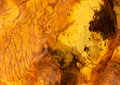 Amber stone texture Royalty Free Stock Photo
