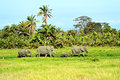 Amboseli elephants family on african savanna safari in Royalty Free Stock Images
