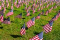 Americam flags Royalty Free Stock Photo