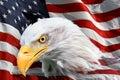 American bald eagle flag Royalty Free Stock Photo