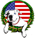 American bulldog with American flag Stock Photos