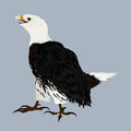 American eagle illustration of an Royalty Free Stock Image