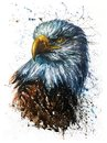 American Eagle watercolor predator wildlife painting Royalty Free Stock Photo