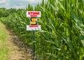 American Field Corn Royalty Free Stock Photo