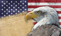 American flag and bald eagle Stock Photos
