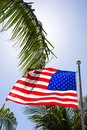 American flag on blue sky with palms Royalty Free Stock Photos
