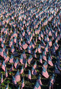 American flags in honor of our veterans a display all on day Royalty Free Stock Photos
