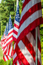 American Flags in a Row Royalty Free Stock Photo