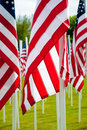 American flags at veterans memorial Royalty Free Stock Photography