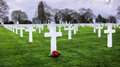 American war cemetery white grave stones with red camillias at the world ii and memorial in st james brittany france Royalty Free Stock Images