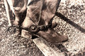 American west rodeo vintage cowboy boots on fence traditional leather with western antique spurs resting an old wood rail at a Stock Photo