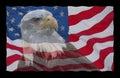Amerikanische Flagge und kahler Adler Lizenzfreie Stockfotos