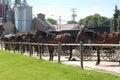 Amish Buggies Royalty Free Stock Photo