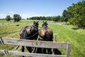 Amish horse drawn hay wagon Royalty Free Stock Photo
