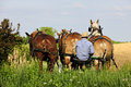Amish Man Plowing with 3 Horses Royalty Free Stock Photo