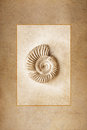 Ammonite fossil rendered as antique sepia tone print framed against a warm sandstone texture background Royalty Free Stock Photos