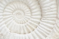 Ammonite prehistoric fossil closeup of an Royalty Free Stock Image