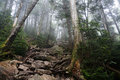 Ammonoosuc after gem pool the ravine trail Royalty Free Stock Photo