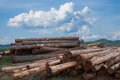 Amount ergunaen timber storage yard and the town inner mongolia hulunbeier Stock Image