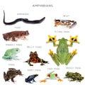 Amphibian education set on white Royalty Free Stock Photo