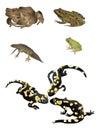 Amphibians Royalty Free Stock Photo
