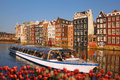 Amsterdam city with boat on canal against red tulips in Holland