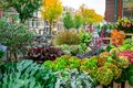 Amsterdam, Netherlands - 15.10.2019: Flowers for sale at a flower market, Amsterdam, The Netherlands Royalty Free Stock Photo