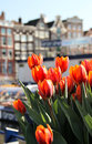 Amsterdam in tulips Royalty Free Stock Photo
