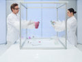 Analyzing biological matter in sterile chamber Royalty Free Stock Photo