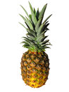 Ananas isolated on white with clipping path element of design Stock Photography