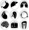 Anatomical icons in vector Stock Images