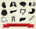 Anatomy icons set 1 Stock Photo