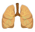 Anatomy of the lung illustrations on white background Royalty Free Stock Photos