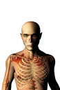 Anatomy man with skeleton seen through and medicine concept Stock Images