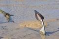 An anchor on the sand beach Royalty Free Stock Photo