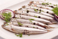 Anchovy Royalty Free Stock Image