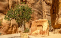Ancient altar in city of petra Royalty Free Stock Photo