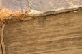 Ancient bible - old book - pages closeup Royalty Free Stock Photo